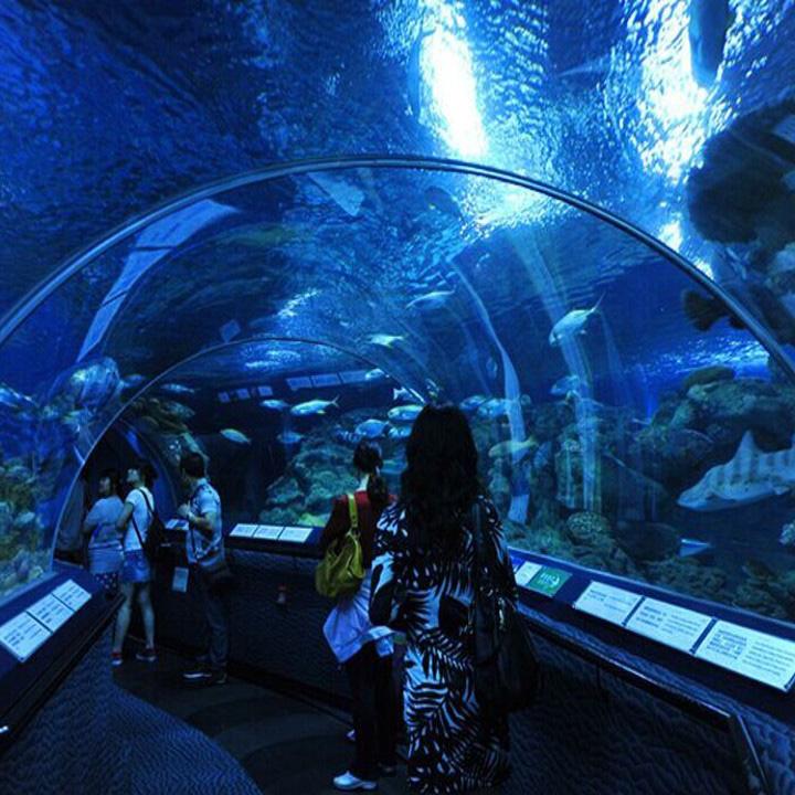 Acuario acrílico de túnel de acuario en forma serpentino