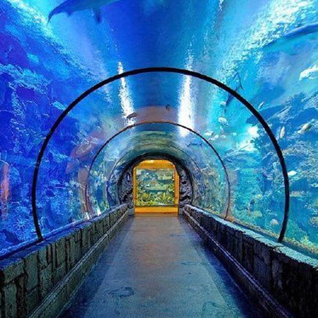 Túnel acrílico grande PG hermoso acuario