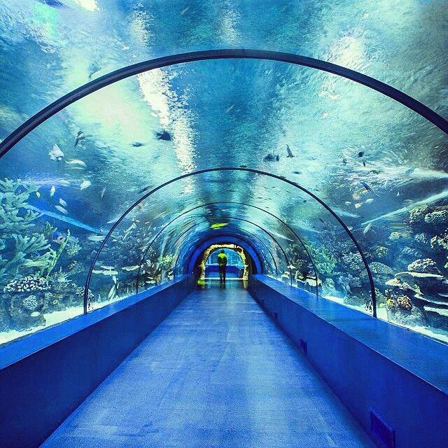 Túnel de acuario acrílico grande mágico
