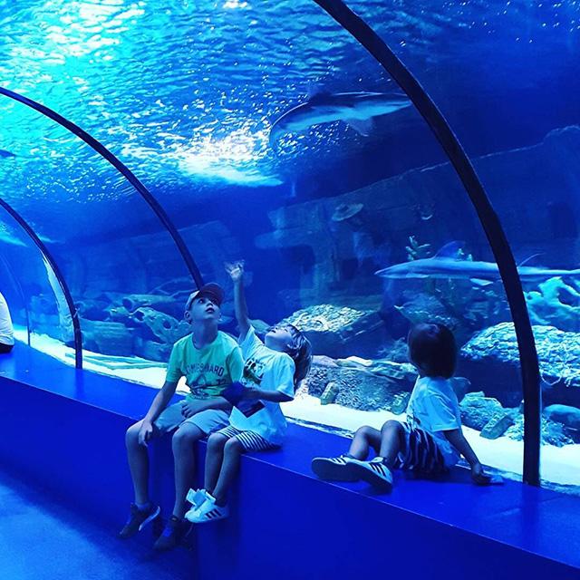 Túnel grande de acuario acrílico a medida PG