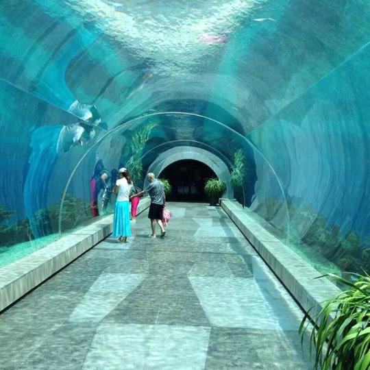 Acuario de Paradise Ocean  Acrílico de Túnel Acuario