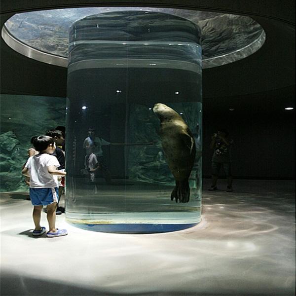 Acuario Acrílico de león marino en el mundo marino