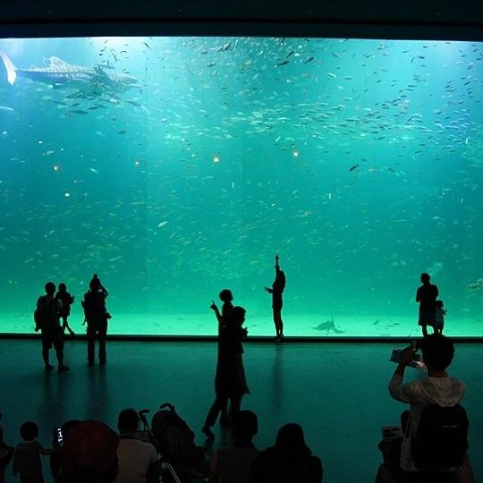 Acuario de paneles de acrílico grueso de Ocean World Shark Show